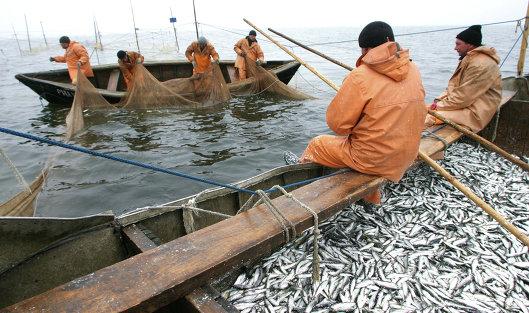 рыболовы на промысле