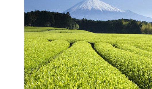 Ограничение напоставку чая изШри-Ланки снимут 30декабря