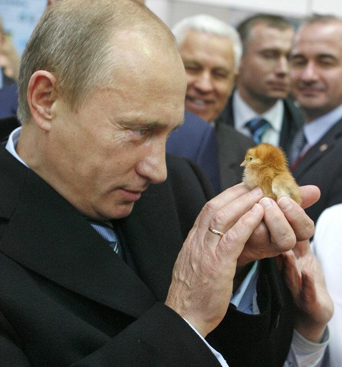 Картинки по запросу Владимир Путин во время посещения агропромышленной выставки «Золотая осень» на ВВЦ, 2008 год