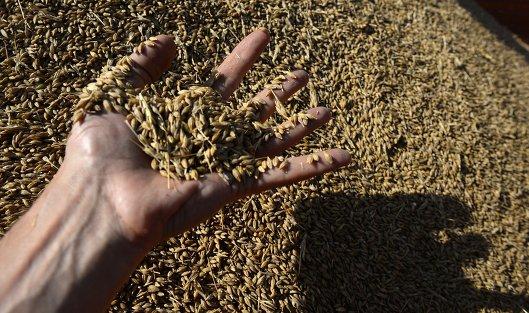 #Уборка зерновых в Свердловской области