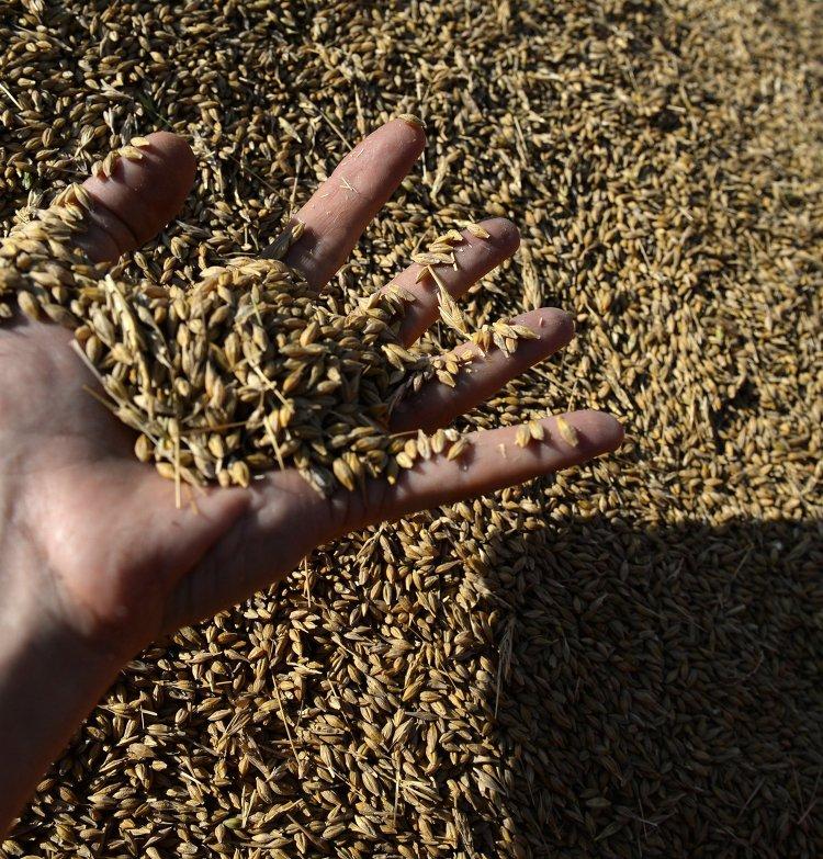 Уборка зерновых в Свердловской области