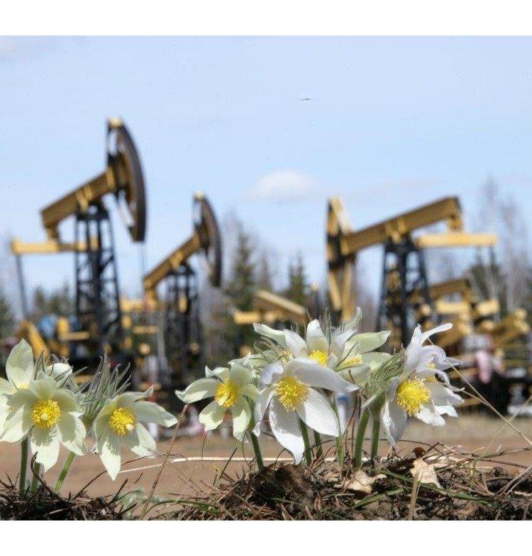 нефтедобыча экология