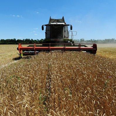 827937901 - Минсельхоз США: Россия в сезоне 2019-2020 сохранит мировое лидерство по экспорту пшеницы