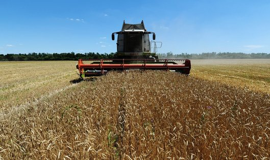 827937910 - Минсельхоз США: Россия в сезоне 2019-2020 сохранит мировое лидерство по экспорту пшеницы