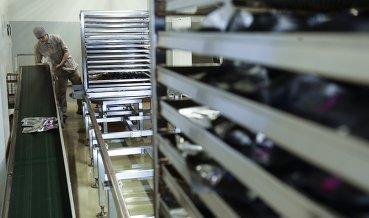 Bayer продолжает диалог с ФАС из-за сделки с Monsanto