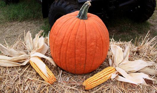 828760295 - Президент США Трамп разрывается между НПЗ и производителями кукурузы