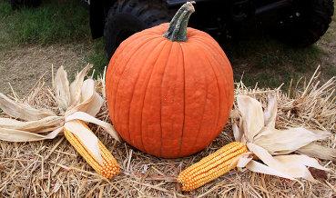 Президент США Трамп разрывается между НПЗ и производителями кукурузы