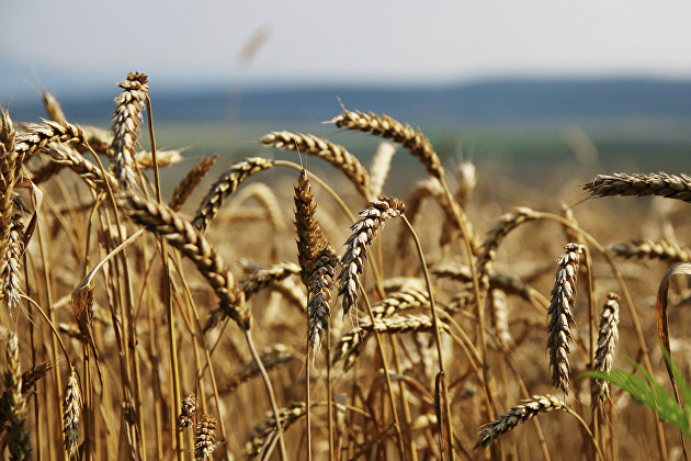 828991045 - Экспорт зерна из РФ превысил прогноз Минсельхоза в 53 млн т