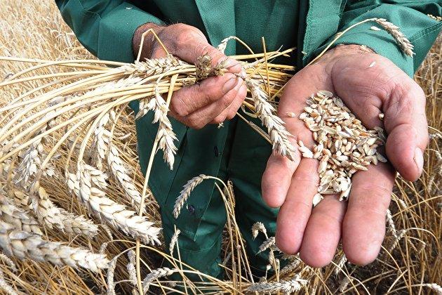 %Уборка зерновых в Челябинской области
