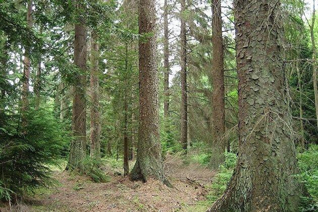 В России предлагают разрешить приватизацию леса