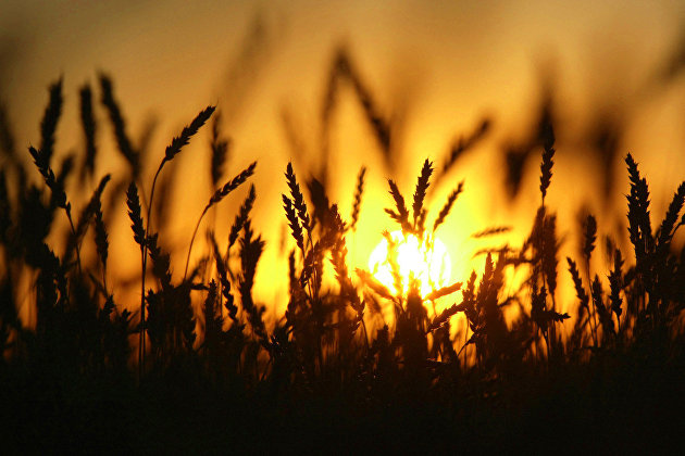 Минсельхоз Узбекистана намерен выращивать в России сою, пшеницу и масличные культуры