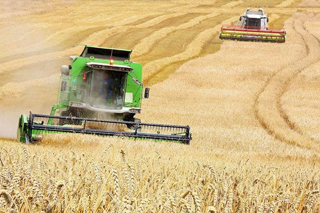 Минсельхоз США повысил прогноз по урожаю пшеницы в России