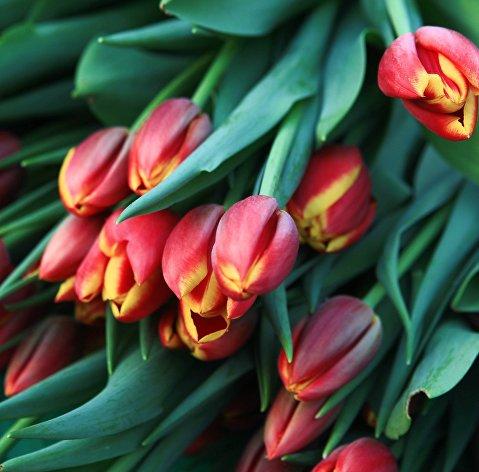829778794 - Флористы советуют дарить 8 марта девушкам нежные цветы, коллегам – классику