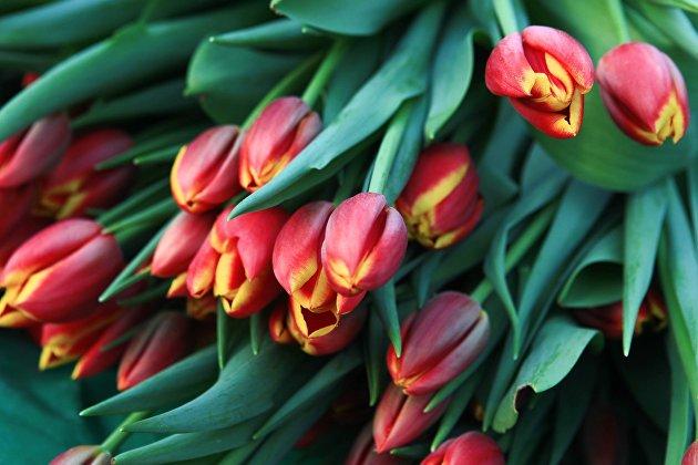 829778803 - Флористы советуют дарить 8 марта девушкам нежные цветы, коллегам – классику