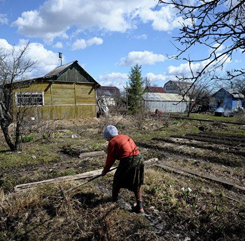 829875323 - Табак попал в число популярных у россиян семян перед дачным сезоном