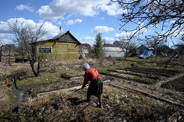 829875329 - Табак попал в число популярных у россиян семян перед дачным сезоном