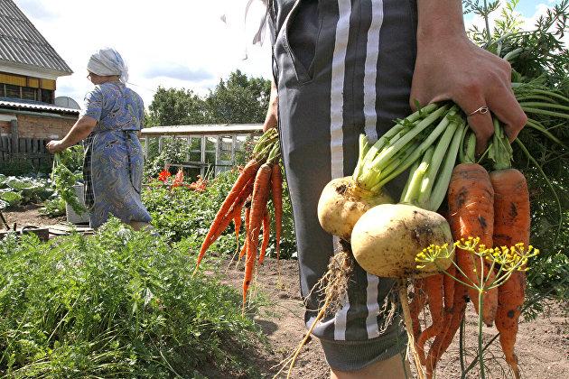 Эксперт Ахмадеев рассказал, когда можно не платить налог при продаже овощей со своего огорода