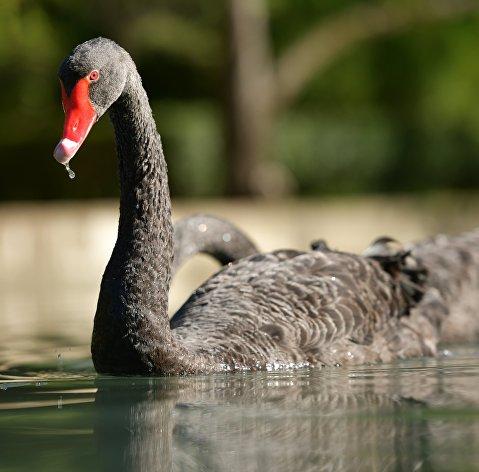"""Эксперты рассказали, какие активы защитят в августе от """"черных лебедей"""""""