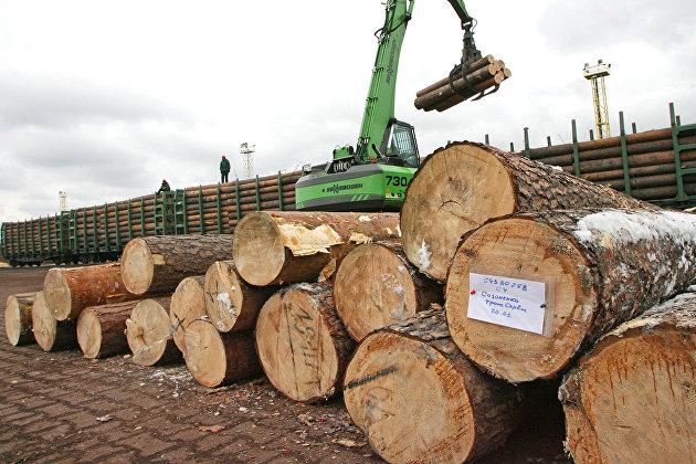 830623873 - Мишустин рассказал, как в России ограничат экспорт леса