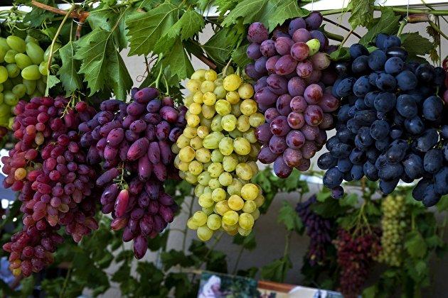 Эксперты предсказывают снижение урожая винограда в России