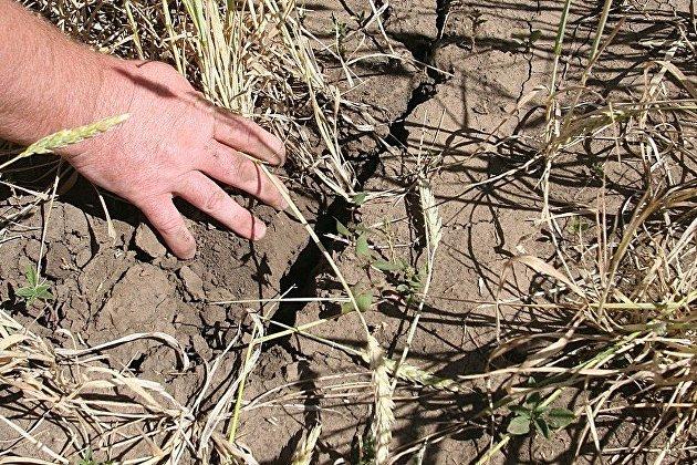 Режим ЧС ввели на территории всей Новосибирской области из-за засухи -  ПРАЙМ, 22.07.2020