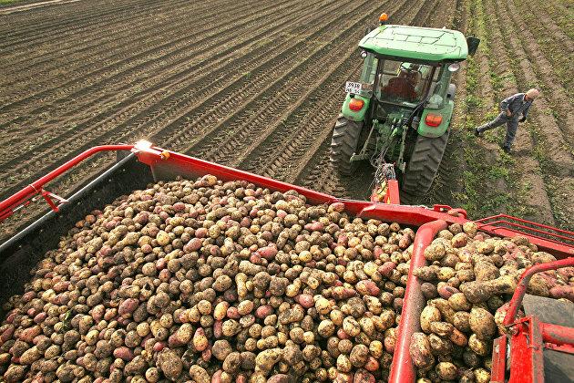 Россия может войти в топ-3 производителей картофеля в мире