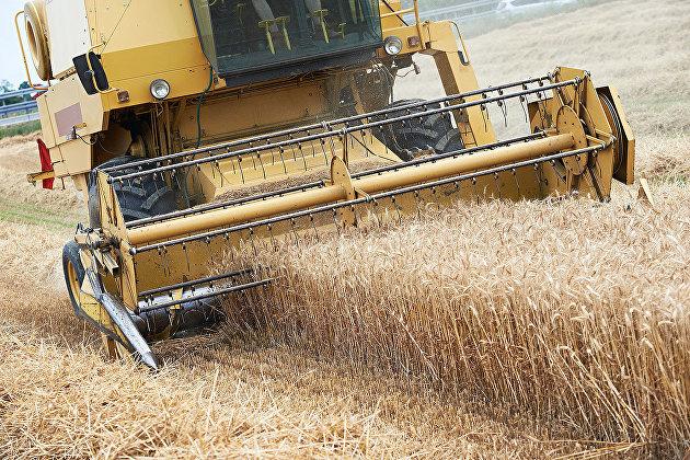 832176252 - Минсельхоз назвал способ стабилизации цен на зерно