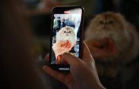 Посетитель выставки фотографирует кошку