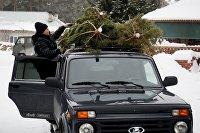 Заготовка новогодних елок