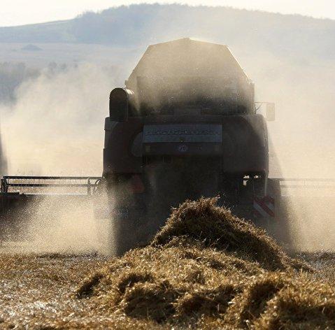 Уборка урожая зерновых в Красноярском крае