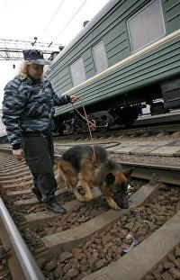 Собака на железной дороге
