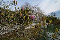 Ранняя весна в Сочи