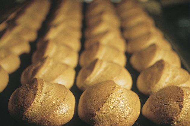 Россияне скоро смогут есть мясо и хлеб из белка насекомых