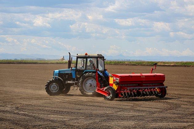 Посевная риса в Краснодарском крае
