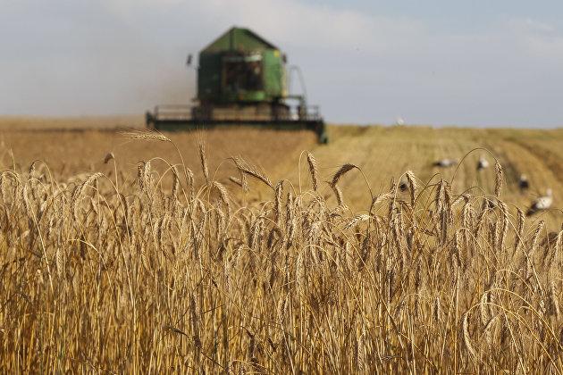 Уборка зерновых в Белоруссии