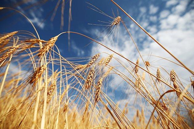 Назван объем дополнительных доходов бюджета от экспортных пошлин на зерно