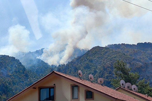 Эрдоган заявил о задержании подозреваемого в поджоге леса на юге Турции
